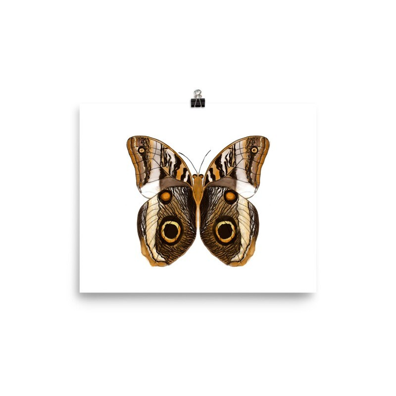 Brown Butterfly, Calico Arteus, Print