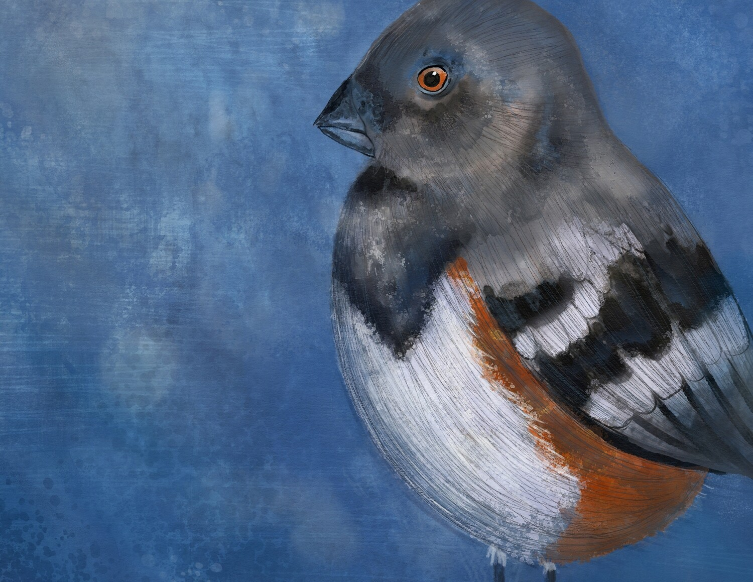 Spotted Towhee Download