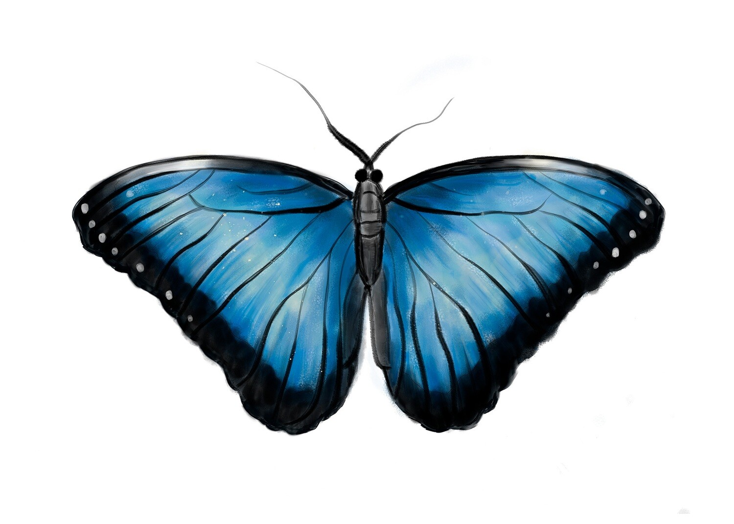 Blue Butterfly, Morpho Peleides, Download