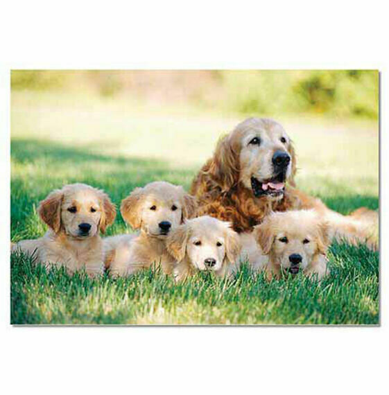 Golden Retriever w/ Puppies