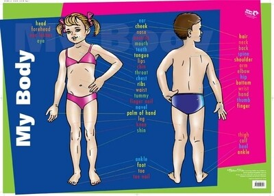 MY Body Wall Chart