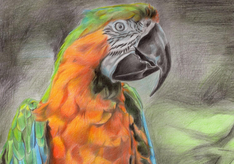 Post Cards (A6) : Birds