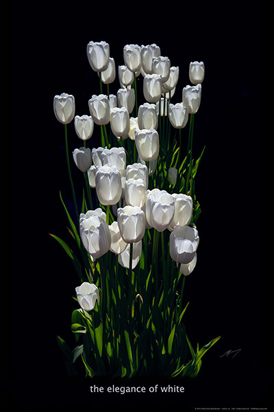 The Elegance of White ... 20