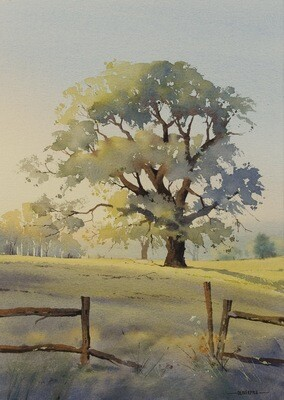 The Sussex Oak