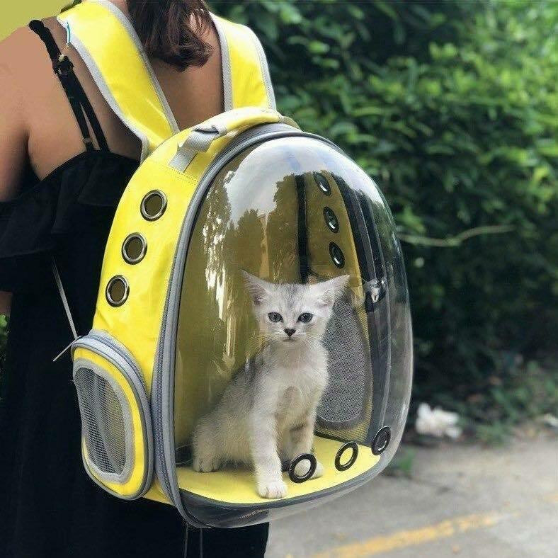 კატის ჩანთა