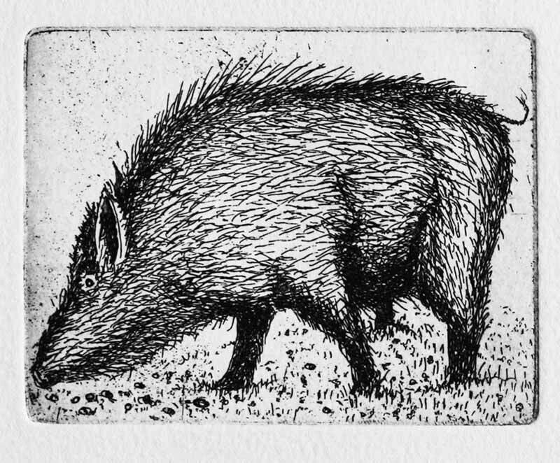 A Boar in Clover