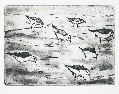 Birds on a Beach