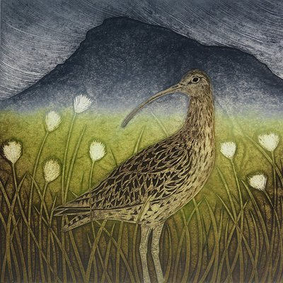 Curlew & Cotton grass -Printmakers Card