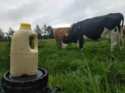 Yogurt de Uchuva