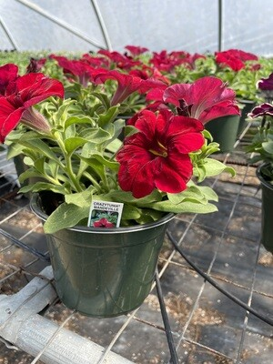 PLANT SALE PREORDER SPRING 20-21 - ENDS APRIL 25TH