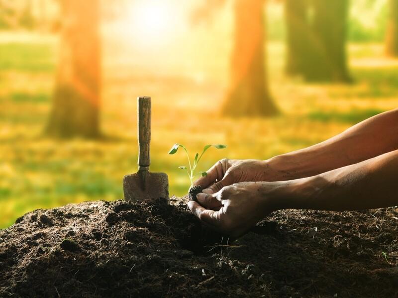 Compost, Garden World Premium   1 Cu. Yd.