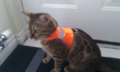 Orange Hi Visibility Fluorescent Fabric
