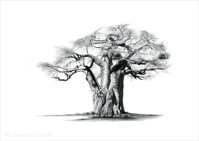 """Baobab Ridge Sentinel"""