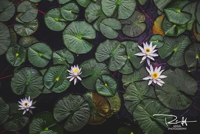 Lily Pads | 47°11'3.714