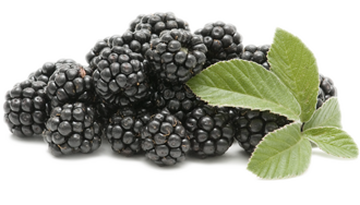 Fresh Blackberries, Blackberries (Priced per 6 oz Container)