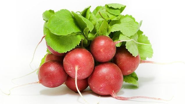 Produce, Red Radishes, Priced per Pound