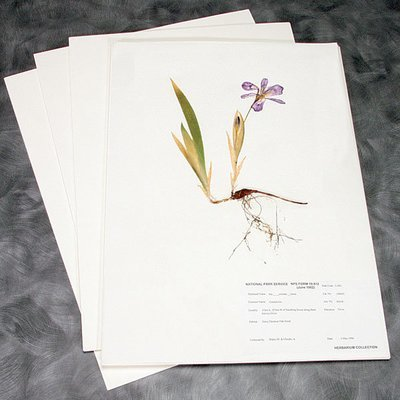 Mounting Paper (11.5