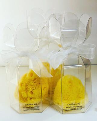 Caribbean Silk Sponge