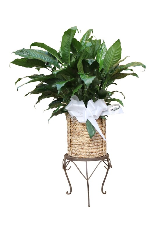 Large Premium Foliage in Decorative Basket