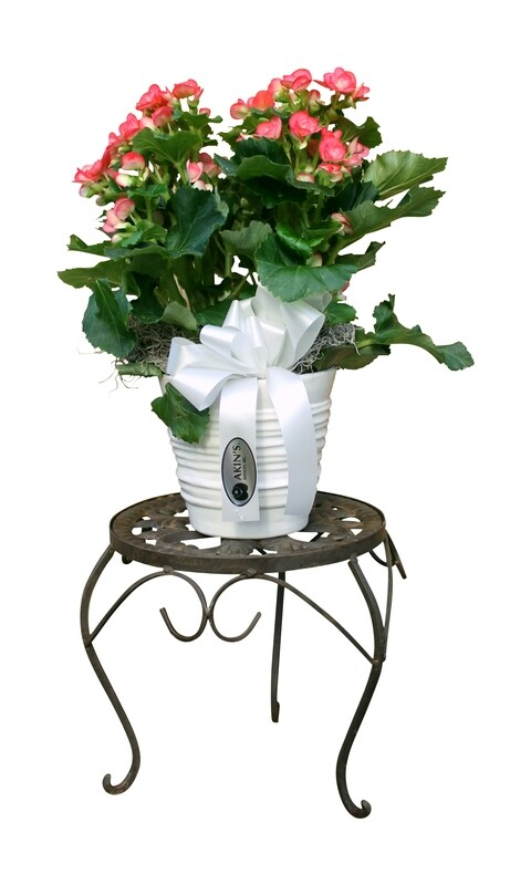 Small Deluxe Foliage in Decorative Basket