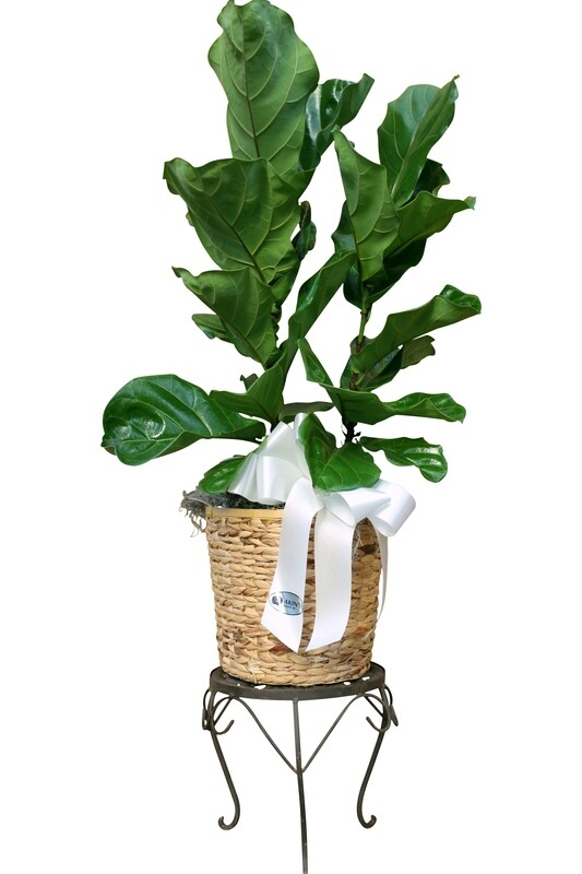 Large Deluxe Foliage in Decorative Basket