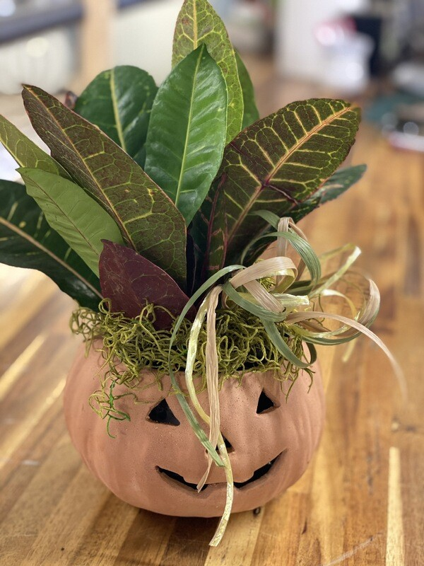 Terra Cotta Pumpkin With Croton