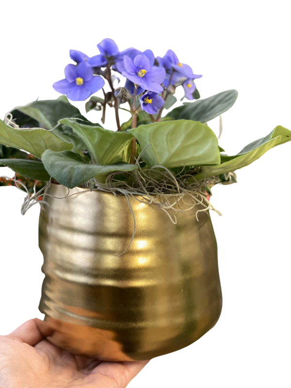 African Violet with Gold Ceramic