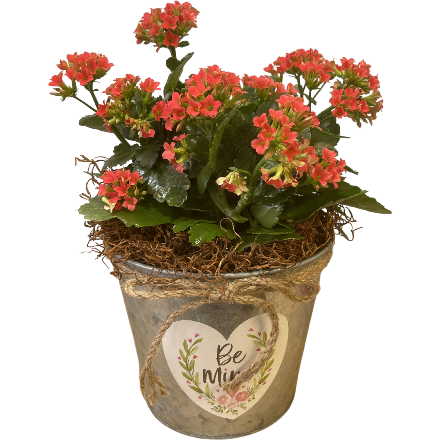 Blooming Kalanchoe in Valentine's Pot