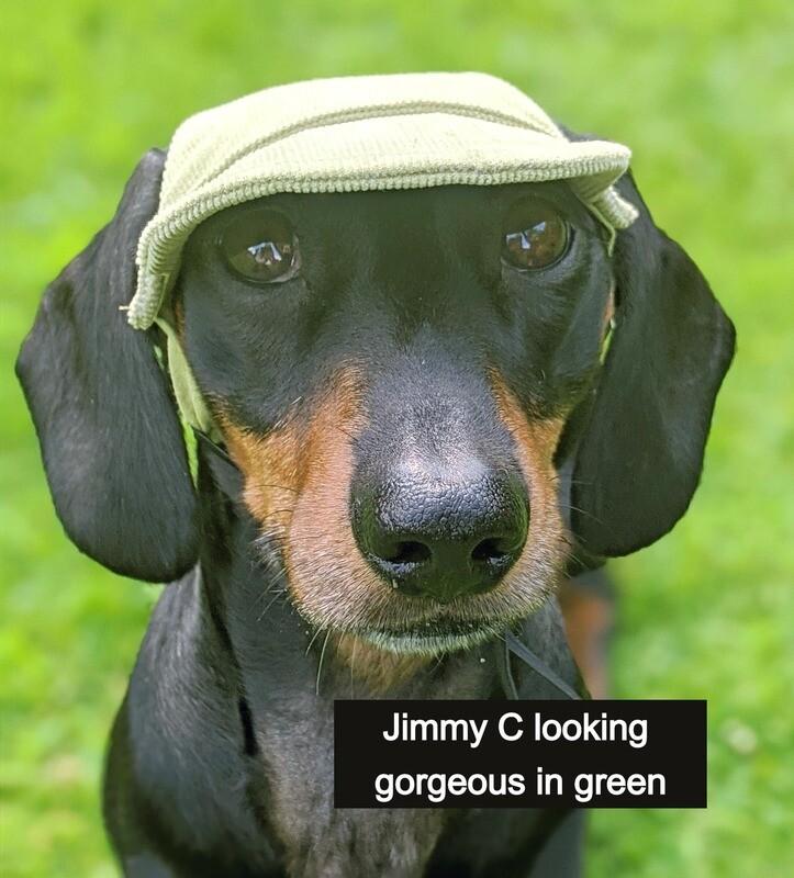 Corduroy Dachshund Hat (Green)