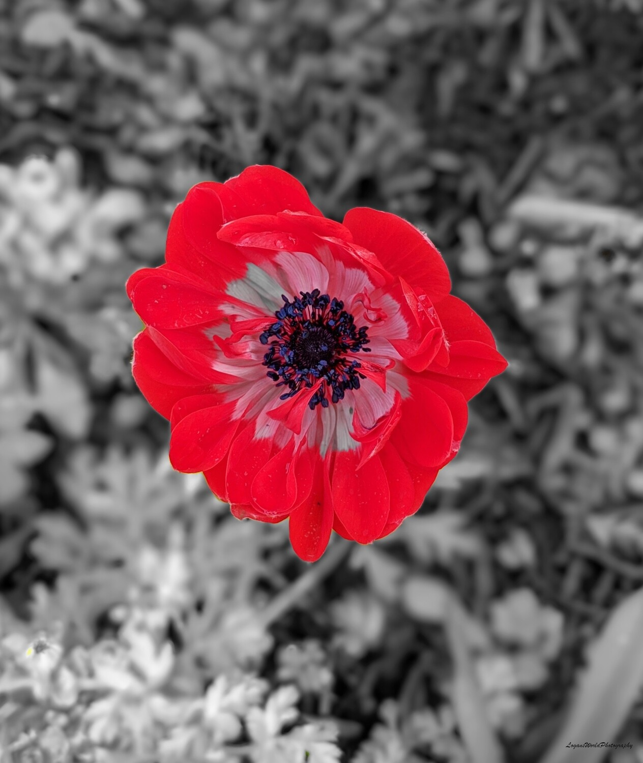 "Color Pop Poppy 11"" x 14"" Photo Print"
