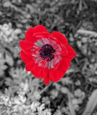 Color Pop Poppy 11