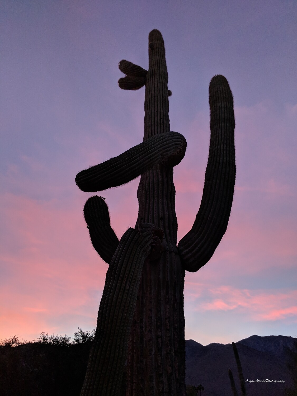 """Cactus Palms Springs 12"""" x 16"""" Photo Print"""