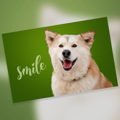 Cards - Smile 10 Pack - Blank