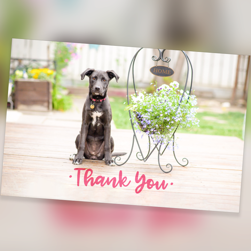 Cards - Thank You 10 Pack - Blank