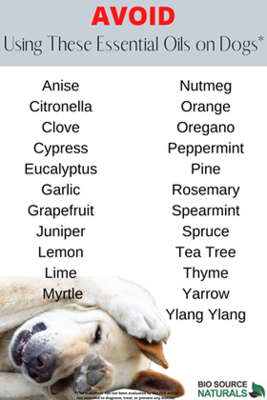 FREE Essential Oils to AVOID for Dogs Chart