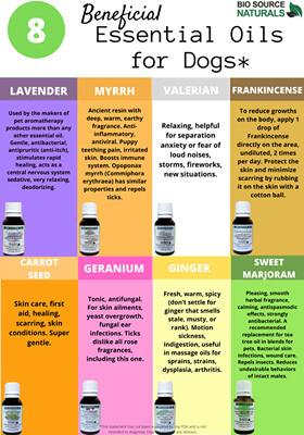 FREE Essential Oils Beneficial for Dogs Chart