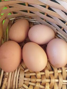 Huevos de Gallina de Mos (1/2 docena)