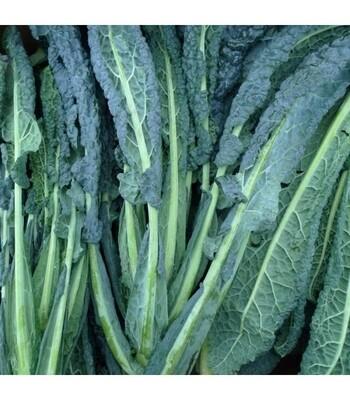 Kale Nero (manoxo)