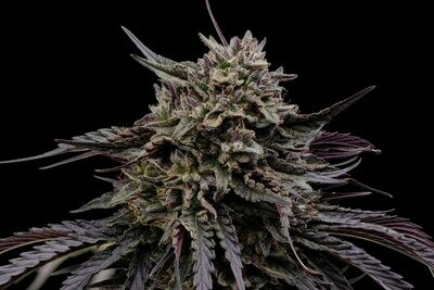 Kush Hemp by Lion Tree Farms- Organic Hemp CBD Flower