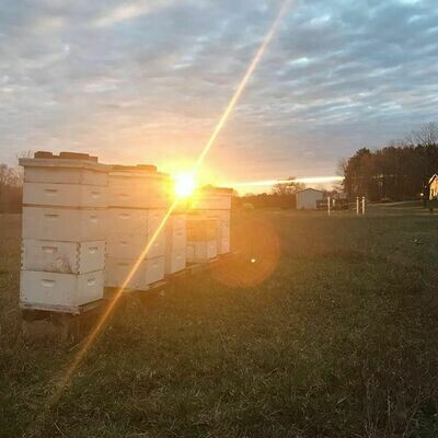 Sponsor a hive
