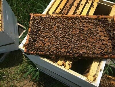 May 8th Healthy Hives Inspection and Management Workshop