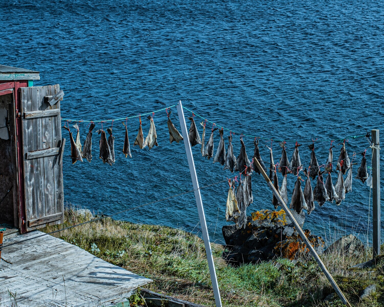Hanging Fish For Winter