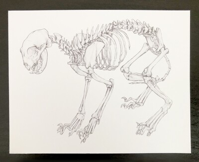 Skeleton Postcard