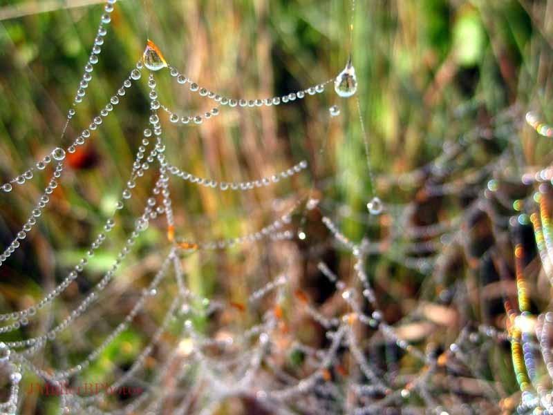 Beads of Dew 2