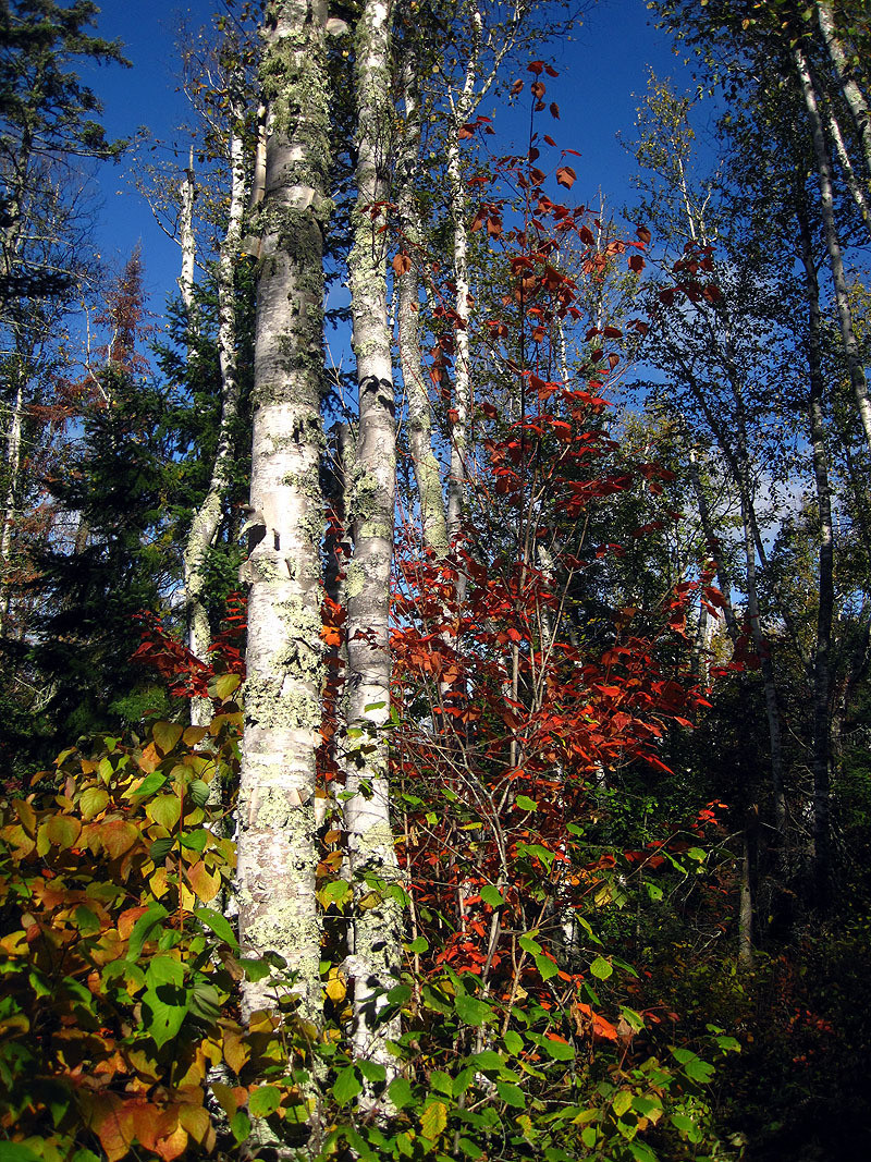 Fall Colors, Ely Minnesota September 2012 (vert)