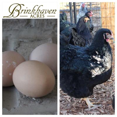Black/Split to Lavender & Pure Lavender Wyandotte Hatching Eggs
