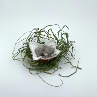 Babymaus im Baumnussbett