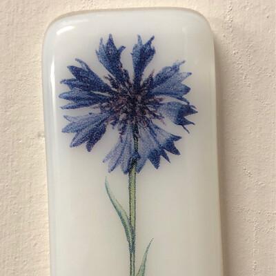 Cornflower White Pocket Hug