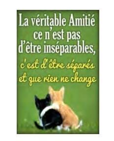 La véritable Amitié ce n'est pas d'être inséparables...