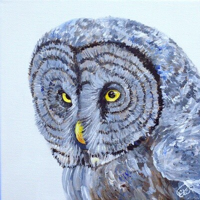 Great Grey Owl Mini Painting!